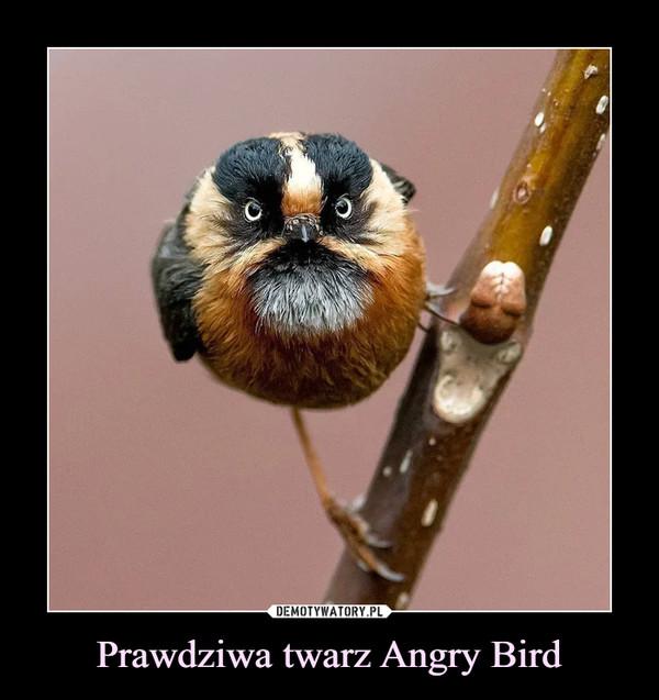 Prawdziwa twarz Angry Bird –