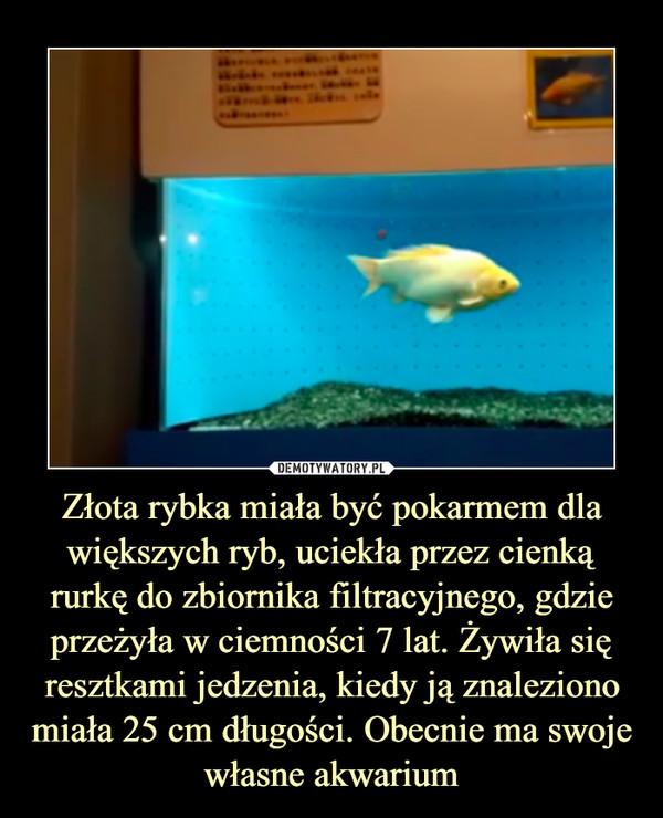 Złota rybka miała być pokarmem dla większych ryb, uciekła przez cienką rurkę do zbiornika filtracyjnego, gdzie przeżyła w ciemności 7 lat. Żywiła się resztkami jedzenia, kiedy ją znaleziono miała 25 cm długości. Obecnie ma swoje własne akwarium –