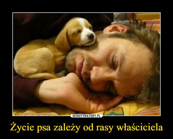 Życie psa zależy od rasy właściciela –