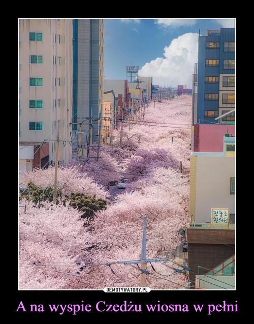 A na wyspie Czedżu wiosna w pełni
