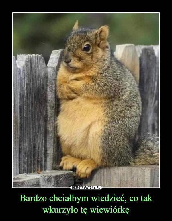 Bardzo chciałbym wiedzieć, co tak wkurzyło tę wiewiórkę –