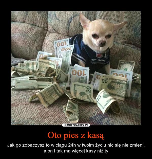 Oto pies z kasą – Jak go zobaczysz to w ciągu 24h w twoim życiu nic się nie zmieni, a on i tak ma więcej kasy niż ty