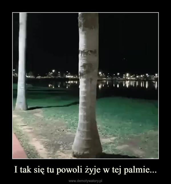 I tak się tu powoli żyje w tej palmie... –