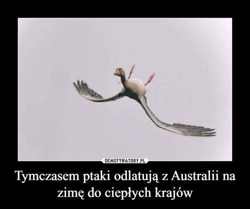 Tymczasem ptaki odlatują z Australii na zimę do ciepłych krajów