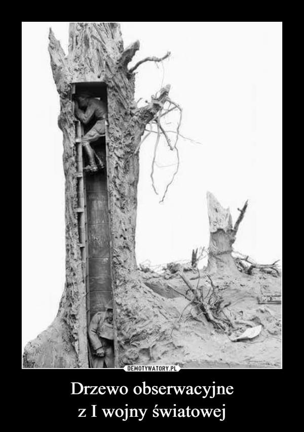 Drzewo obserwacyjnez I wojny światowej –