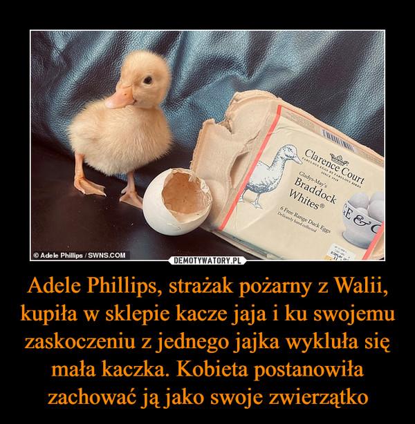 Adele Phillips, strażak pożarny z Walii, kupiła w sklepie kacze jaja i ku swojemu zaskoczeniu z jednego jajka wykluła się mała kaczka. Kobieta postanowiła zachować ją jako swoje zwierzątko –