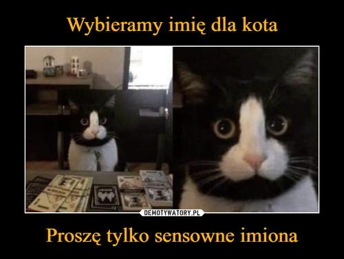 Wybieramy imię dla kota Proszę tylko sensowne imiona