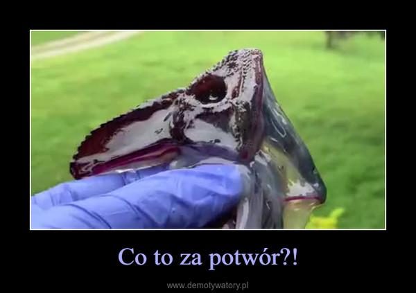 Co to za potwór?! –