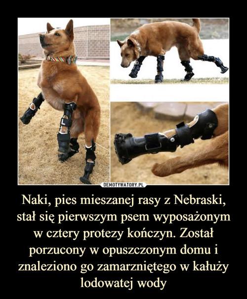 Naki, pies mieszanej rasy z Nebraski, stał się pierwszym psem wyposażonym w cztery protezy kończyn. Został porzucony w opuszczonym domu i znaleziono go zamarzniętego w kałuży lodowatej wody