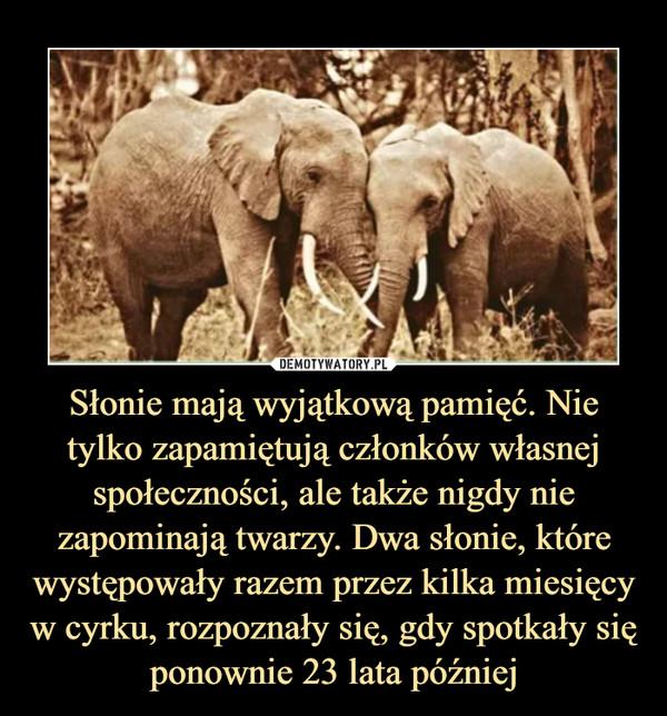 Słonie mają wyjątkową pamięć. Nie tylko zapamiętują członków własnej społeczności, ale także nigdy nie zapominają twarzy. Dwa słonie, które występowały razem przez kilka miesięcy w cyrku, rozpoznały się, gdy spotkały się ponownie 23 lata później –