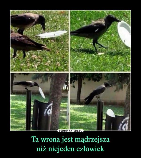 Ta wrona jest mądrzejszaniż niejeden człowiek –