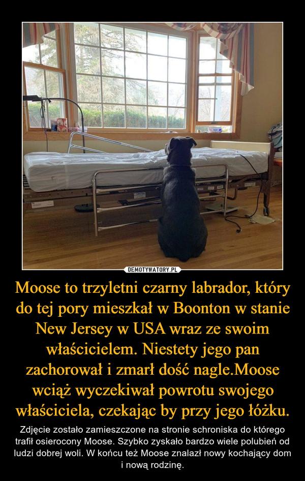 Moose to trzyletni czarny labrador, który do tej pory mieszkał w Boonton w stanie New Jersey w USA wraz ze swoim właścicielem. Niestety jego pan zachorował i zmarł dość nagle.Moose wciąż wyczekiwał powrotu swojego właściciela, czekając by przy jego łóżku. – Zdjęcie zostało zamieszczone na stronie schroniska do którego trafił osierocony Moose. Szybko zyskało bardzo wiele polubień od ludzi dobrej woli. W końcu też Moose znalazł nowy kochający dom i nową rodzinę.