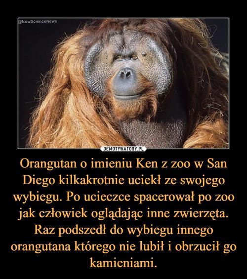 Orangutan o imieniu Ken z zoo w San Diego kilkakrotnie uciekł ze swojego wybiegu. Po ucieczce spacerował po zoo jak człowiek oglądając inne zwierzęta. Raz podszedł do wybiegu innego orangutana którego nie lubił i obrzucił go kamieniami.