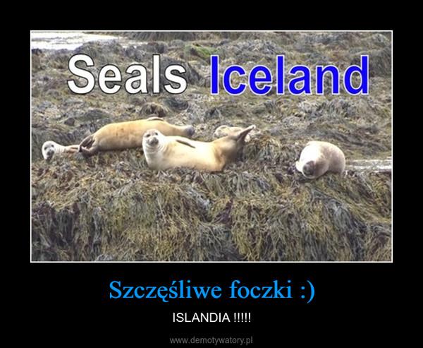 Szczęśliwe foczki :) – ISLANDIA !!!!!