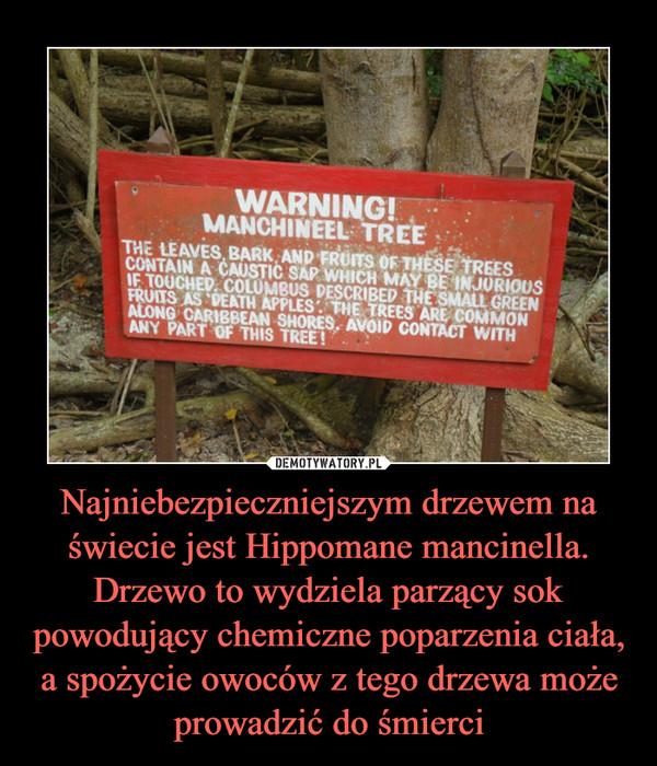 Najniebezpieczniejszym drzewem na świecie jest Hippomane mancinella. Drzewo to wydziela parzący sok powodujący chemiczne poparzenia ciała, a spożycie owoców z tego drzewa może prowadzić do śmierci –