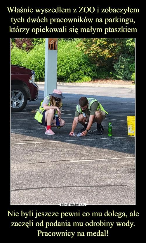 Właśnie wyszedłem z ZOO i zobaczyłem tych dwóch pracowników na parkingu, którzy opiekowali się małym ptaszkiem Nie byli jeszcze pewni co mu dolega, ale zaczęli od podania mu odrobiny wody. Pracownicy na medal!