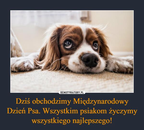Dziś obchodzimy Międzynarodowy Dzień Psa. Wszystkim psiakom życzymy wszystkiego najlepszego! –
