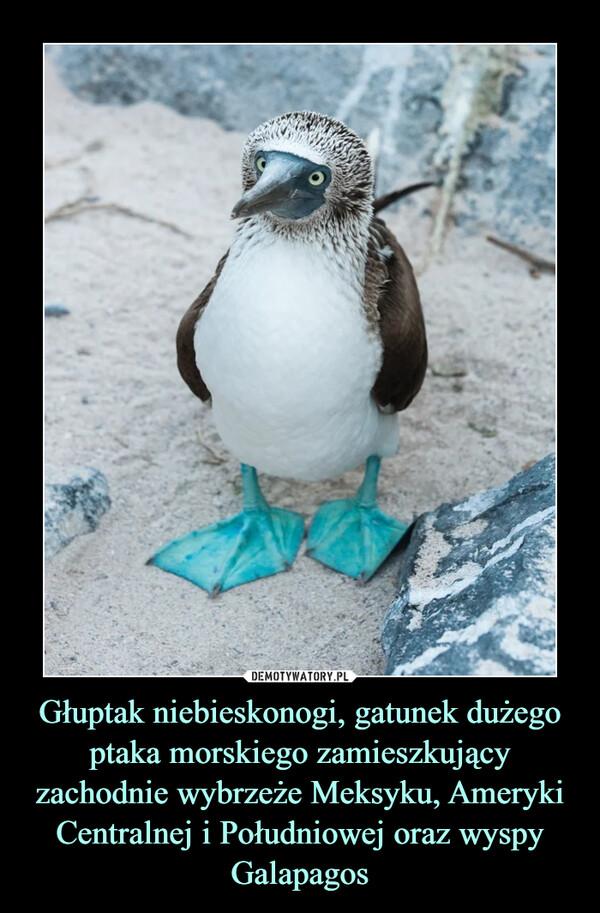 Głuptak niebieskonogi, gatunek dużego ptaka morskiego zamieszkujący zachodnie wybrzeże Meksyku, Ameryki Centralnej i Południowej oraz wyspy Galapagos –
